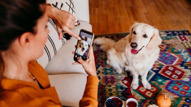 Frau fotografiert ihren Hund