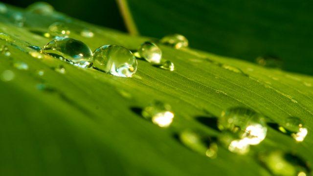 Wassertropfen auf grünem Blatt.
