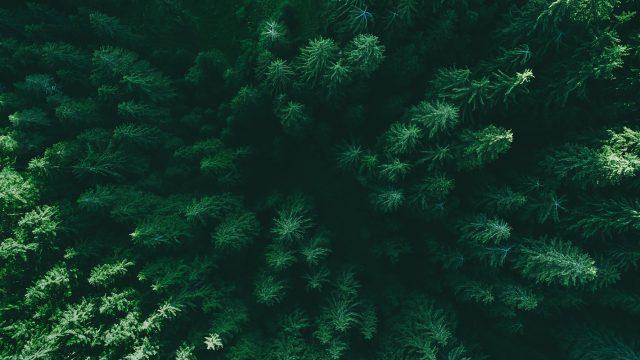 Können Wälder beim Klimaschutz helfen