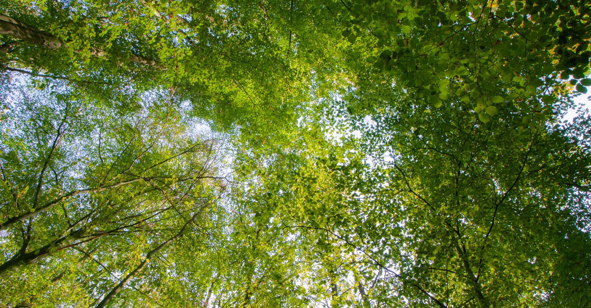 Laubwald, der beim Klimaschutz helfen soll