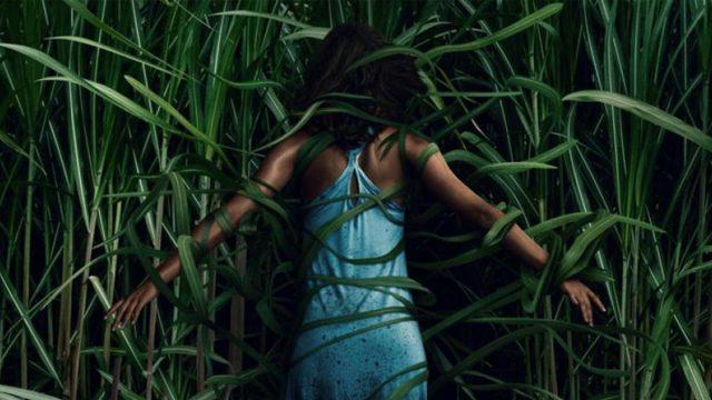 Poster von Im hohen Gras bei Netflix