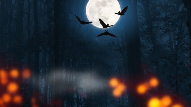 Wir stellen Dir die besten Gruselfilme zu Halloween vor
