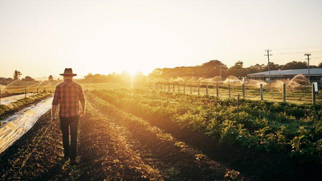 Landwirt geht durch seine Felder, die mit der App gegen Pflanzenschäden überwacht werden