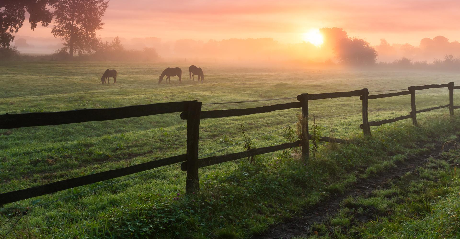 Drei Pferde auf Koppel im Sonnenaufgang mit Nebel