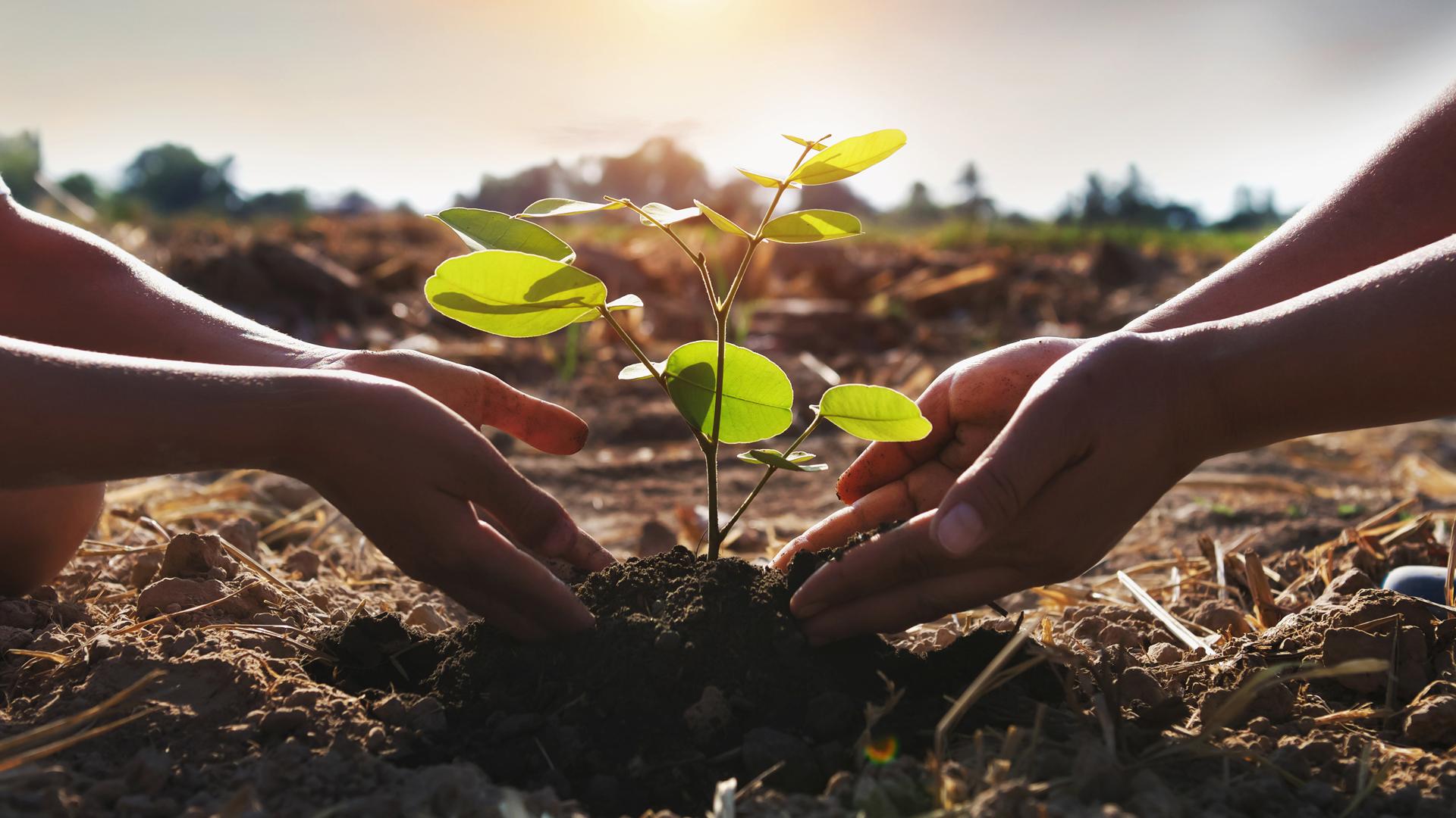 Zwei Händepaare pflanzen gemeinsam einen Baum in der Erde, im Hintergrund geht die Sonne auf.