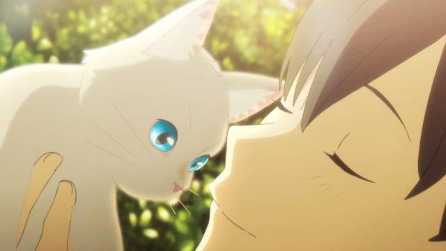 Um Ein Schnurrhaar Anime