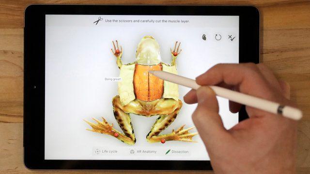 Apple Pencil zeichnet Frosch auf iPad