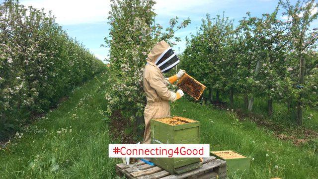 Ein Imker und ein Bienenvolk auf einem blühenden Feld.