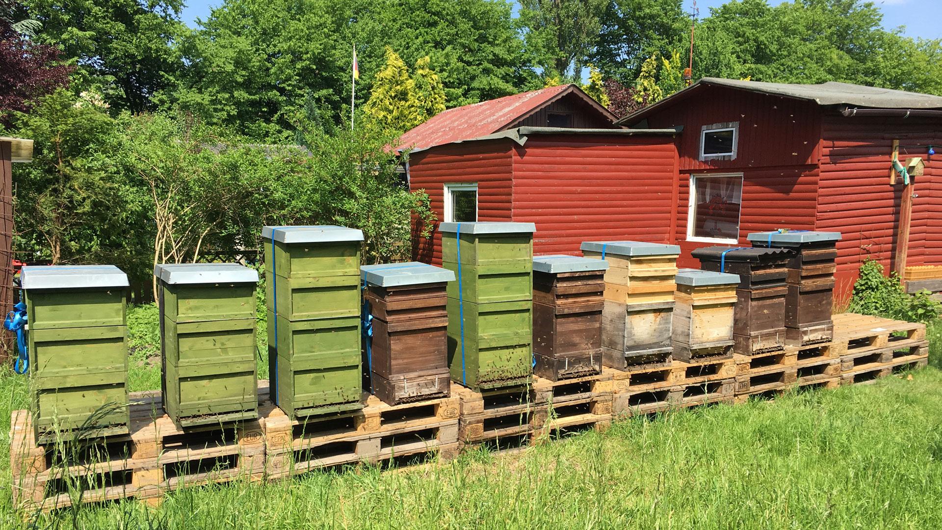 In einem Kleingarten stehen zahlreiche Kisten voller Bienenvölker.