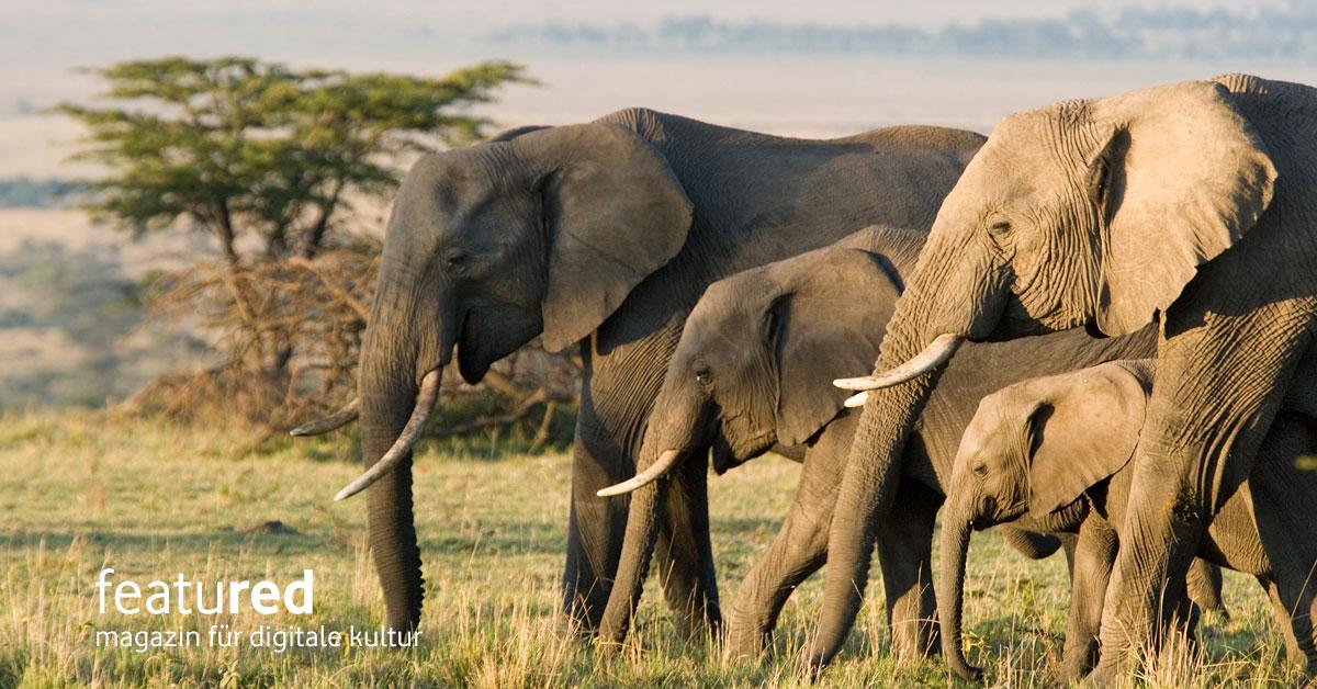 Elefanten Intelligenz