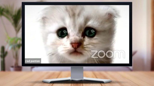 Screenshot Katze Zoom