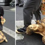 أبطأ رجل في العالم: يمشي مع سلحفاة يوميًا لمدة 20 سنة