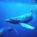 حقيقة صراخ الحوت الازرق في الاسكندرية!