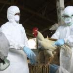 """""""إنفلونزا الطيور"""" تظهر مُجددًا في هذه الدولة"""