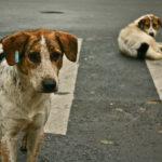 هل الكلاب الضالة سبب انتقال كورونا للإنسان؟.. دراسة جديدة