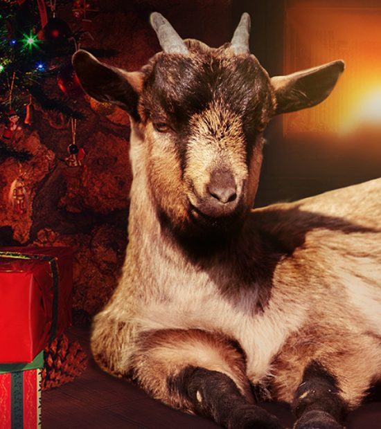 all i want for christmas is a goat wenderfalck
