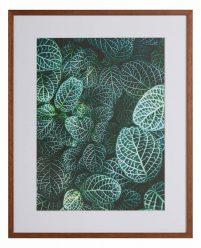 Botanische tuin by Samuel-