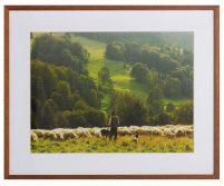 Herder-