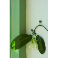Plantenklemmen-Moestuin