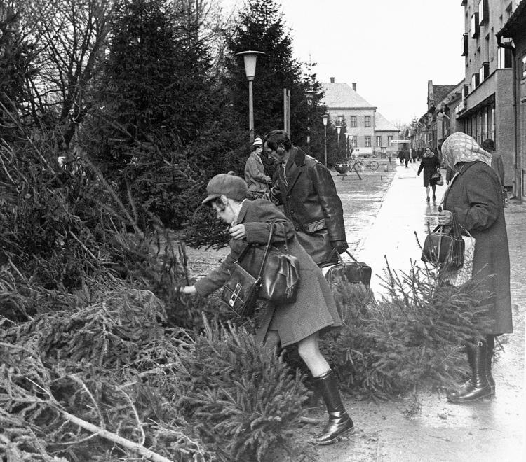Vyberanie vianočného stromčeka. Námestie Hunyadi tér, 1974.
