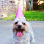 Happy Birthday: Wir zeigen dir, wo du an deinem Geburtstag ordentlich abstauben kannst!