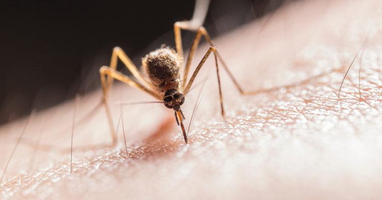DIY: Natürliche Hilfe bei Insektenstichen