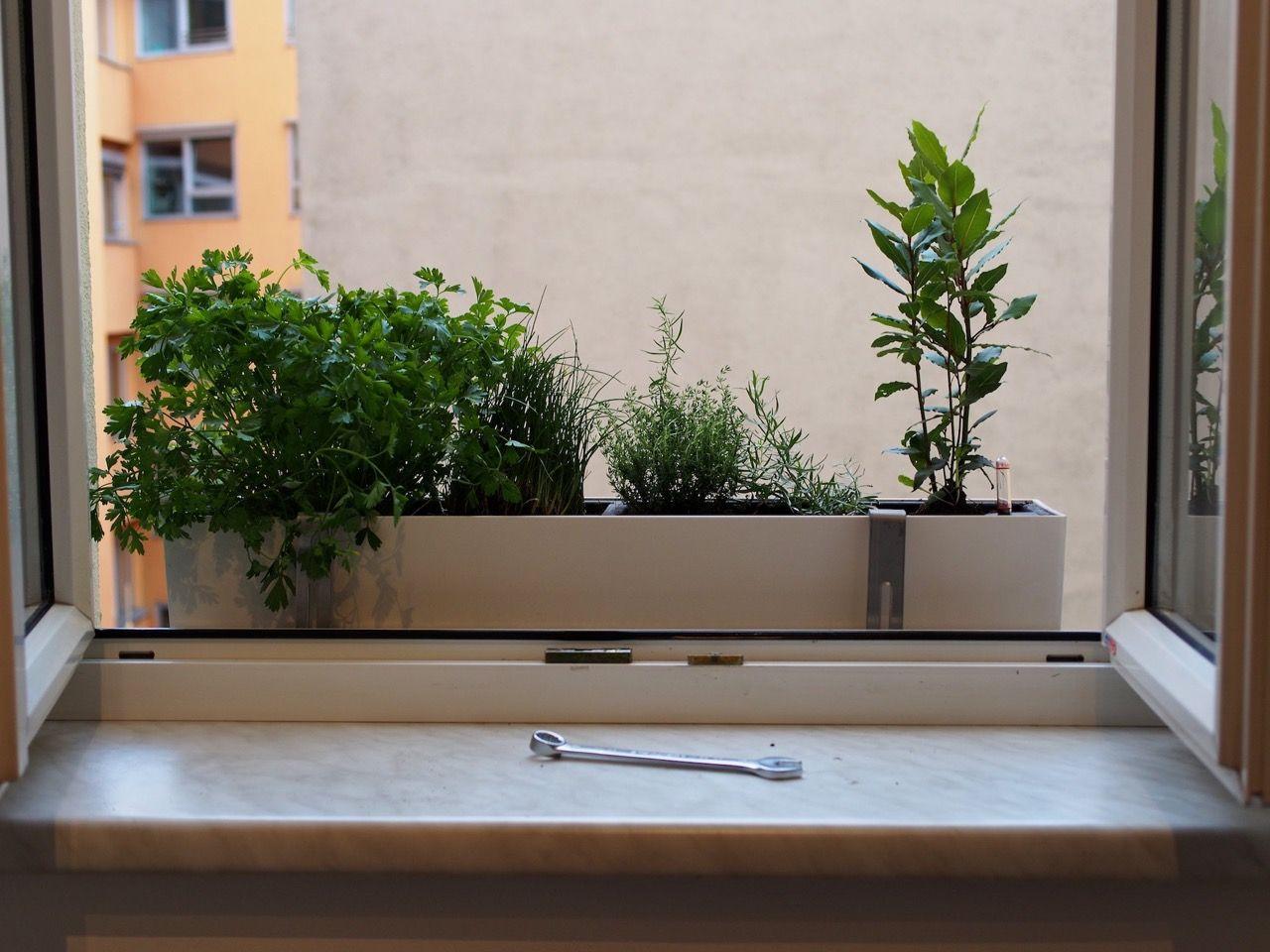 Urban Gardening Im Kleinformat Iamgreen