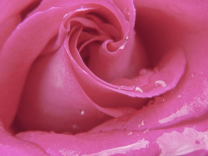 naturkosmetik rose