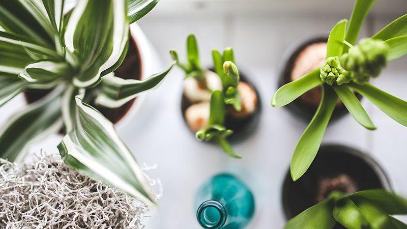 TOP10: Tipps für deinen nachhaltigen Haushalt