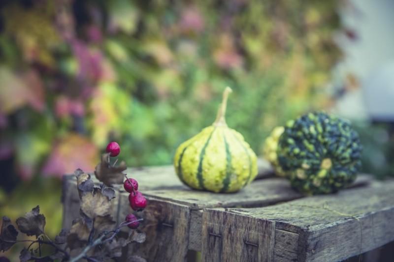 saisonale Lebensmittel August