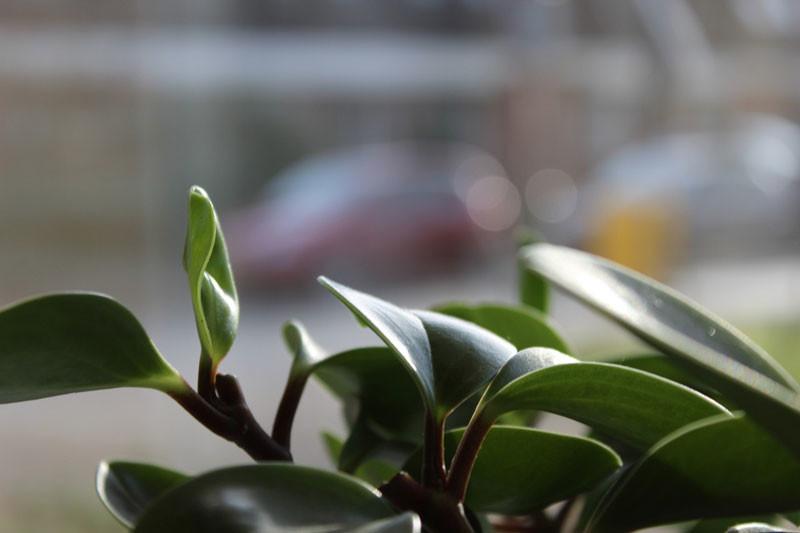 Pflegeleichte pflanzen - Hangepflanzen garten ...