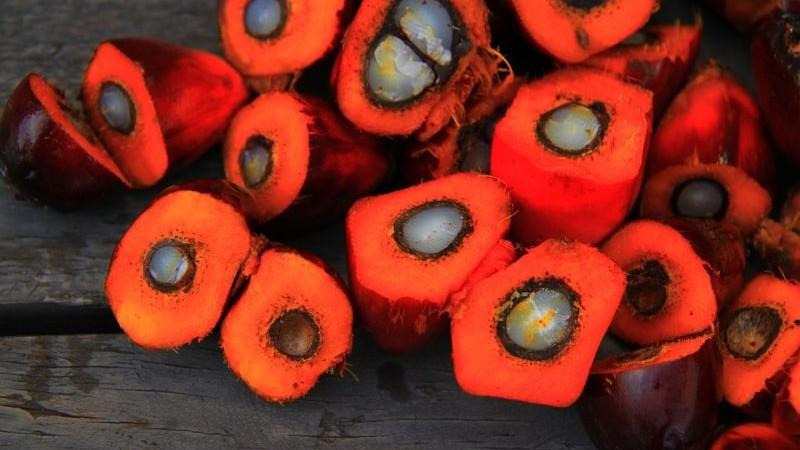 Einfache Alternativen zu Palmölprodukten