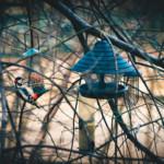 Top5: Tipps für einen vogelfreundlichen Garten