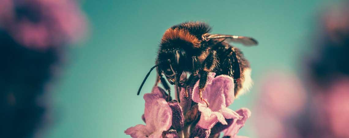 Bienenwachstücher: Die frische Alternative zu Alufolie & Plastikbehältern!