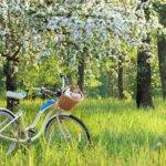Nachhaltige Mobilität? Trends im Bereich der Mobilität und Stand der klimafreundlichen Mobilitätswende