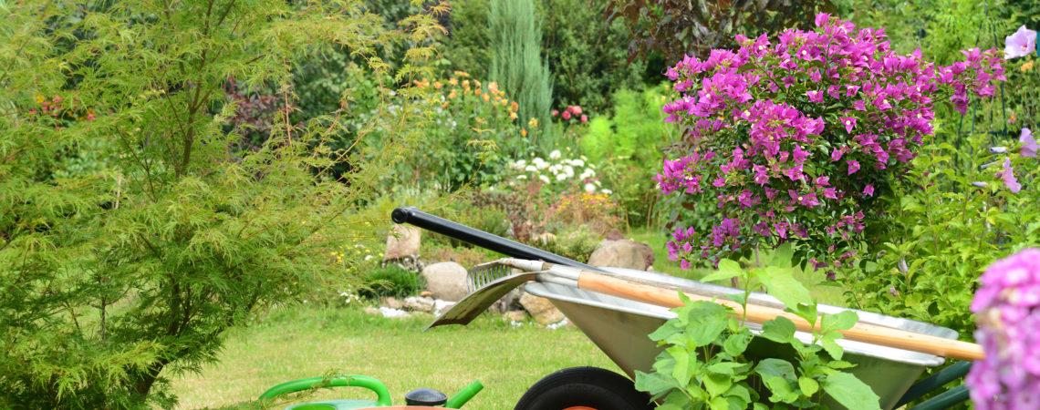 Nachhaltigkeit im eigenen Garten –  So hältst du dich und deinen Garten gesund
