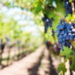 Herbst in Wien: Weinzeit & Sturmsaison