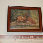 Forgách Múzeum megnyitója – III. Forgách Károly muflonjai (foto: Balkó Gábor)
