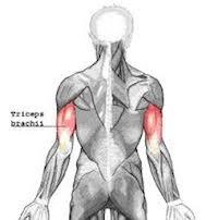 Triceps tendinopathie
