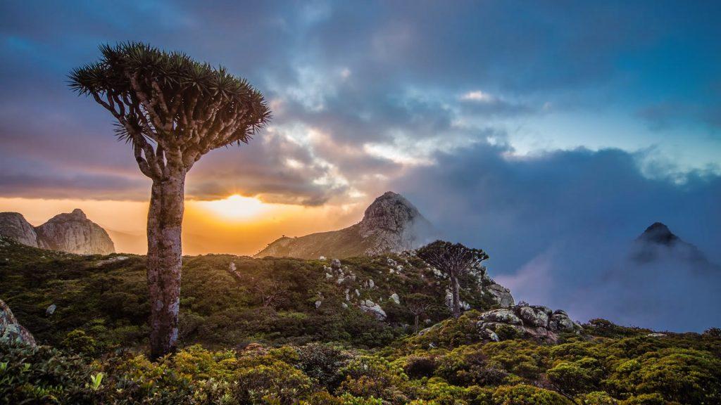 Удивительный Остров Сокотра
