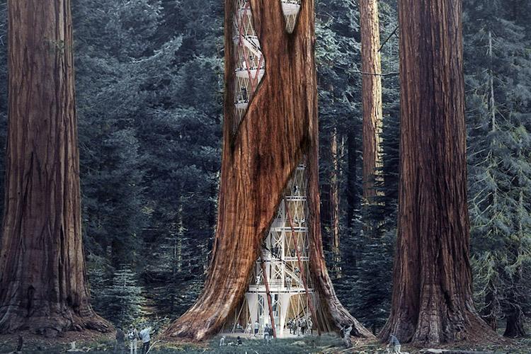 Небоскребы-деревья: зеленая архитектура продолжает генерировать необычные идеи