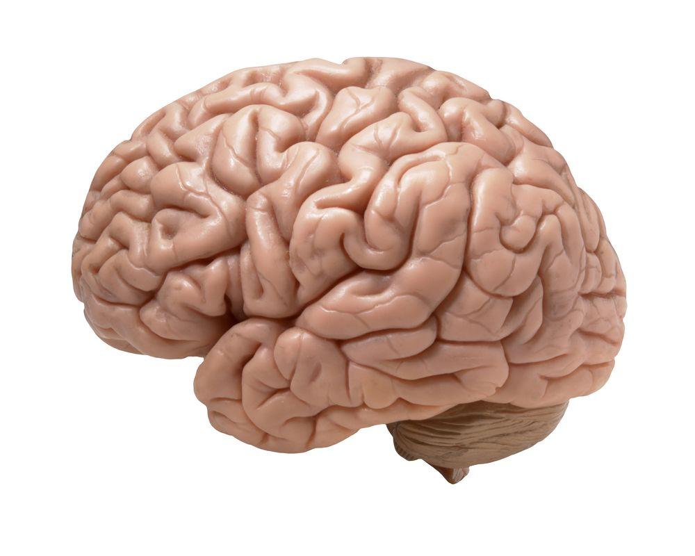 Взламывая код «Enigma» нашего мозга