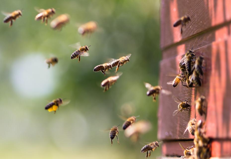 bijenkast