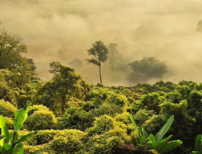Regenwoud. (foto: Boudewijn Huysmans - Unsplash)