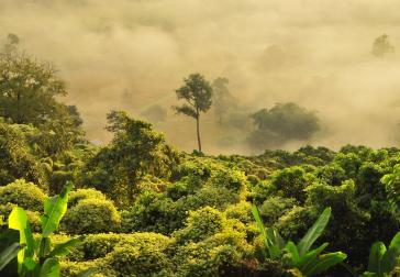 Regenwoud (foto Boudewijn Huysmans via Unsplash)