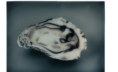 Sarah De Vos - Oyster n°6 (foto ©Peter Stuijk)