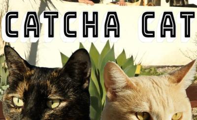 Catcha Cat