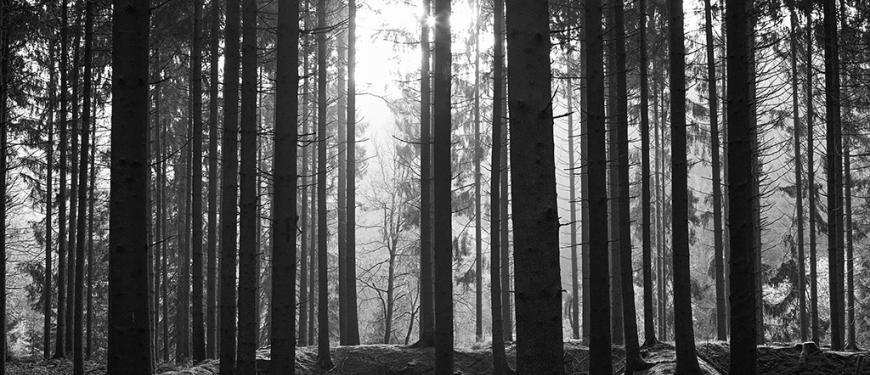 Alex De Bruycker, Märchenwald - !FOTOGRAFIECIRCUIT!