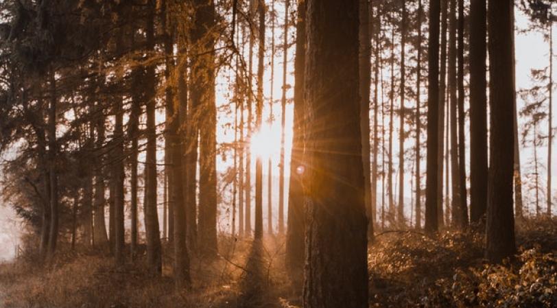 Natuurcoaching opleiding tot natuurcoach foto bos