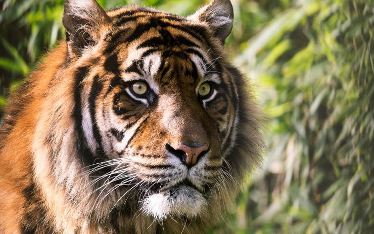 Tiger Optics cavity ringdown spectroscopy (CRDS)
